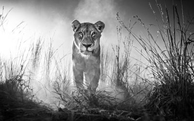 The haunting wildlife photography by DAVID YARROW