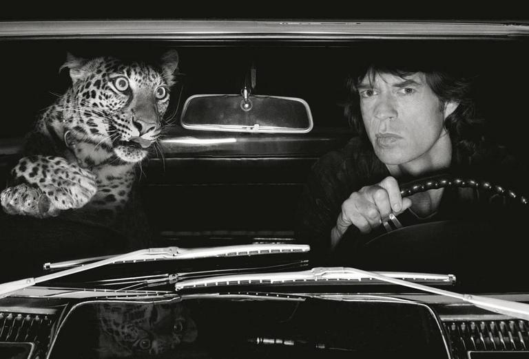Mick Jagger with Leopard in Car