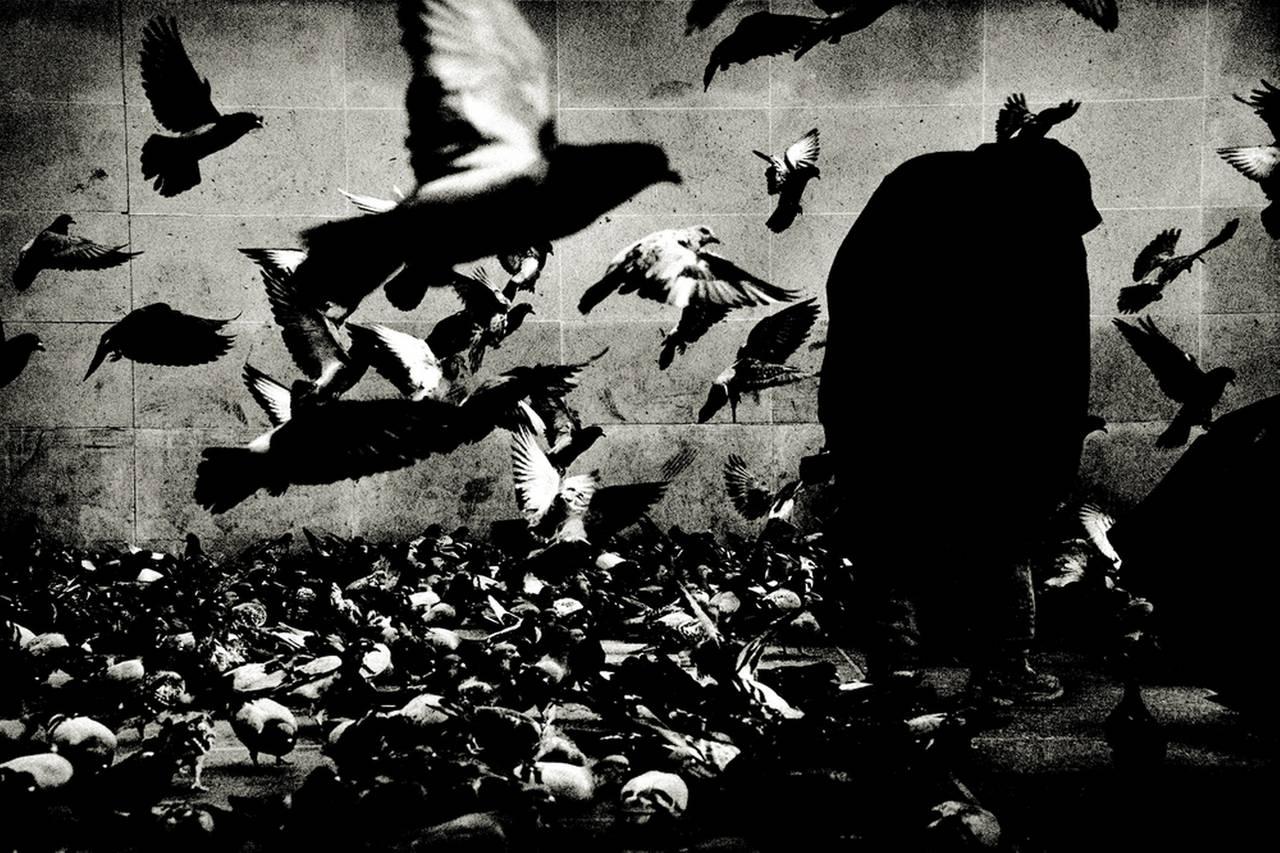 The Birds, Paris