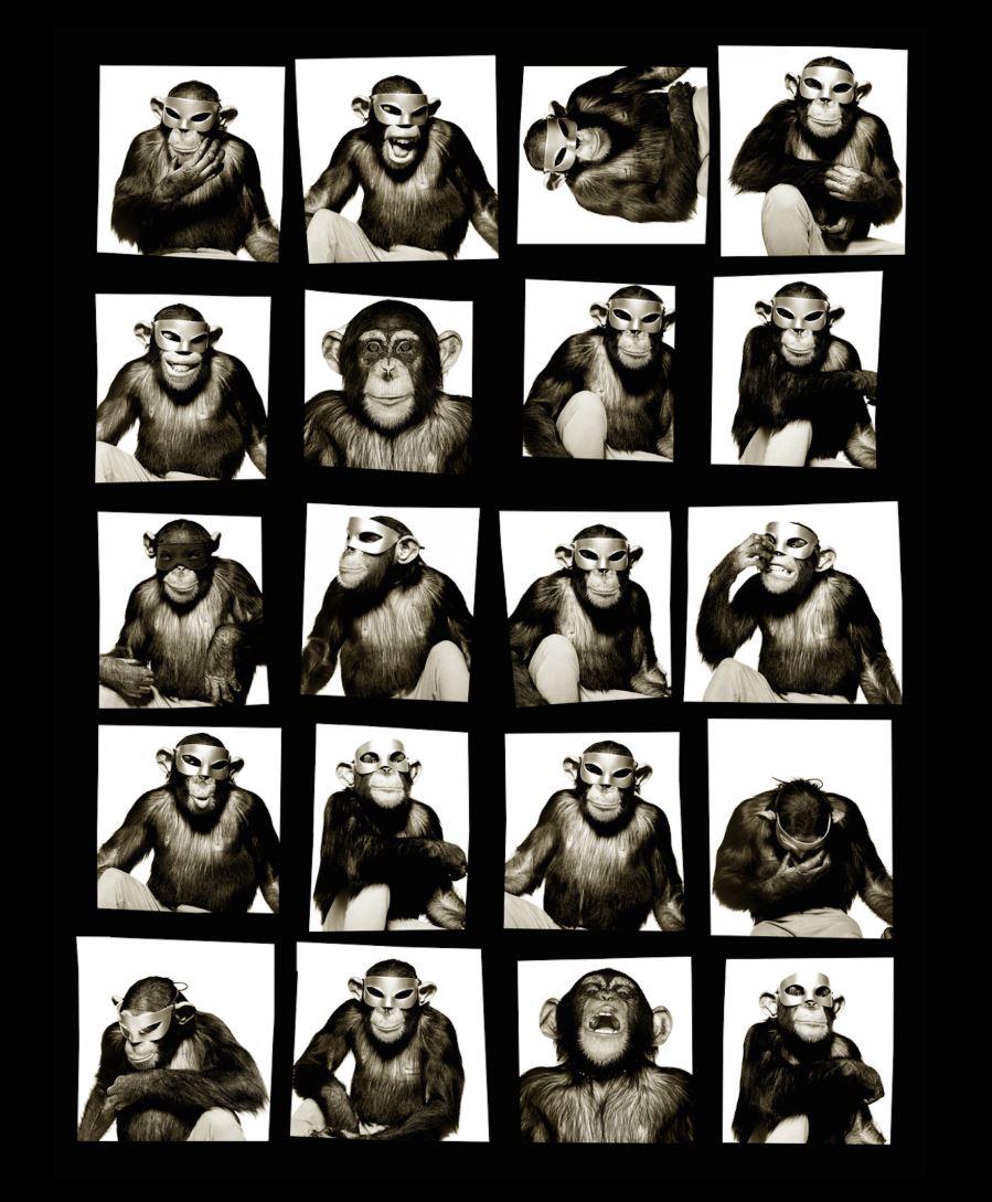 Monkey Contact Sheet